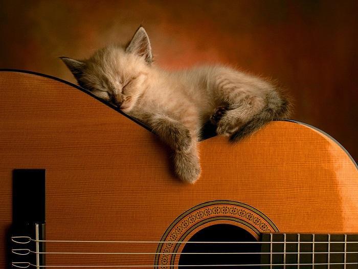 musica-gato